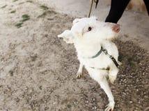 Hound dog vegetation Royalty Free Stock Images