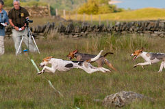 Hound Trail photo finish Stock Photos