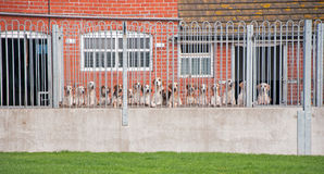 Hounds Royalty Free Stock Photography