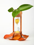 Hourglass with green and dry leaves. As a symbol of passing time Stock Photo