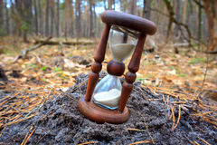 Hourglass in pine forest Stock Photos