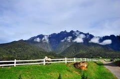 Hourse и majectic гора Стоковое Фото