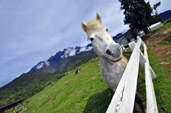 Hourse и majectic гора Стоковое Изображение RF