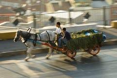 hourse istanbul тележки Стоковое Фото