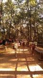 Hourses som drar påfyllningthrogh skogen royaltyfri bild