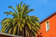 Hous coloniale variopinto e plam nelle vie di Valparaiso - il Cile immagini stock