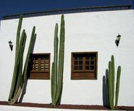House. Big cactus in front of white wall of house royalty free stock image