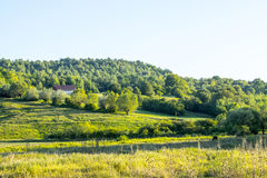 House above the field. House above the green field in ukrainian village Ganniv. Western Ukraine - agricultural land Stock Photo