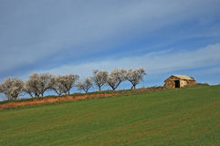 The house of the almond-trees Royalty Free Stock Photo