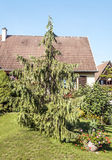 House in Alsace Stock Photography