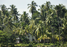 A house amidst palm trees on the coast Stock Photo
