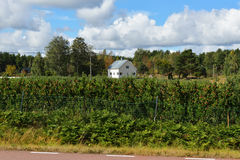 House in apple orchard Stock Photography