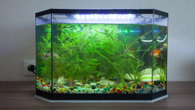 House aquarium with fishes. Timelapse stock video footage