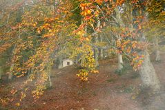House in the autumn beech forest Royalty Free Stock Photography