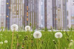 House on the background of dandelions. the concept of the construction of larger homes and overcrowding in large cities. Huge house on the background of royalty free stock images