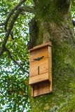 House for bats on a tree stock photo