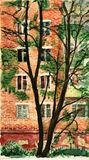House behind the tree. Stock Photos