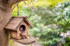 House bird. Bird house in the nature with dramatic tone Royalty Free Stock Photo