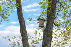 A house for birds – birdhouse. Stock Photography
