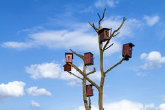 House for birds on a dry tree Stock Image
