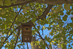 House birds in a tree full of leaves Royalty Free Stock Images