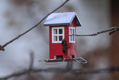 House for the birds Stock Photography