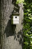 House for birds on the trunk of an old maple in a city park. Spring. Sunny day in May stock photography