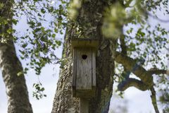 House for birds Stock Image