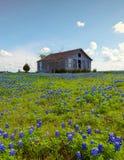 A House in Bluebonnet flowers, Ennis. A House in Bluebonnet flowers stock image