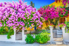 House with bougainvillea Royalty Free Stock Images