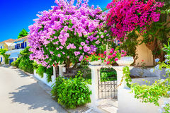 House with bougainvillea Stock Image