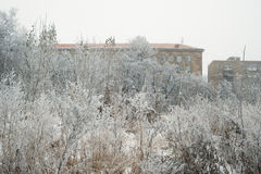 House on the branches of trees covered with frost background Stock Image