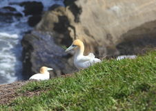 House building Gannet Stock Images