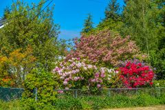 Flower House Profusion. This house in Burien, Washington has an abundance of flowers on display royalty free stock photo
