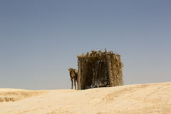 House and camel Royalty Free Stock Photography