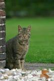 House cat stock image