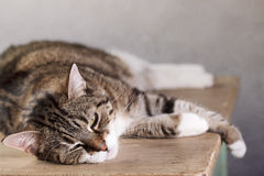 House Cat Stock Photo
