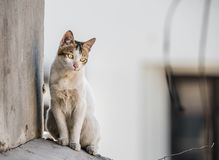 House cat or domestic cat sitting. House cat or domestic sitting on a cemented structure and looking down,  background Royalty Free Stock Images