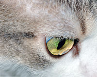 House Cat Eye. A close-up head shot of a domestic house cat's eye Stock Image