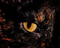House Cat Eye. A close-up head shot of a domestic house cat's eye Royalty Free Stock Images
