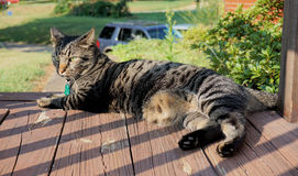 House cat on front porch Royalty Free Stock Photography