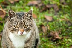 House cat . Stock Images