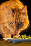 House Cat Licking Sushi Royalty Free Stock Photo