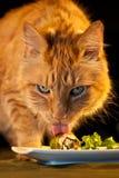 House Cat Licking Sushi. Domestic house cat licking sushi royalty free stock photo