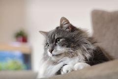 House cat Stock Photos
