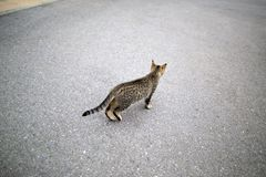House Cat Looking Away. A house cat walking on the street and looking away from the camera Stock Photo