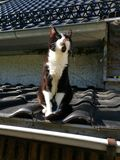 House cat Royalty Free Stock Photo