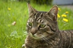 House Cat Portrait Stock Photography