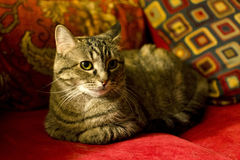 House Cat on Red Couch Stock Photo