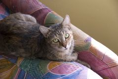 House Cat Resting on a Colorful Chair royalty free stock image